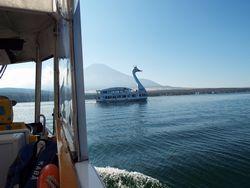 山中湖に浮かぶスワン