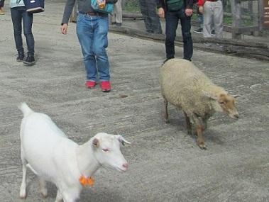 南ヶ丘牧場の動物ふれあい広場