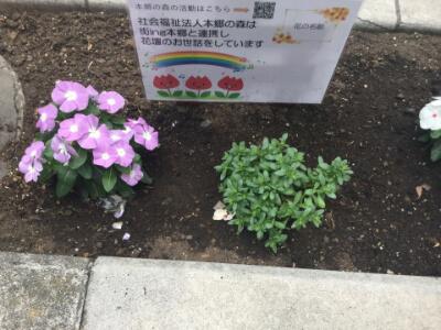 2018年5月本郷通りの花壇