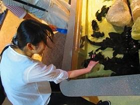 新江ノ島水族館ふれあいコーナー