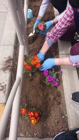 本郷通りの花壇にマリーゴールドとペチュニアを植えているところ
