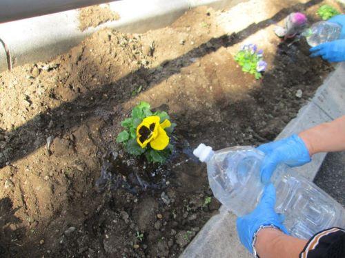 植えたら水やり