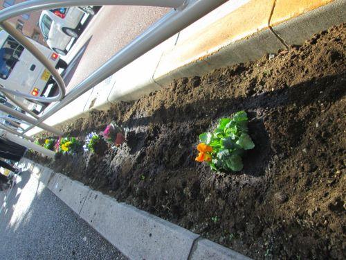 新しいお花を植えた様子